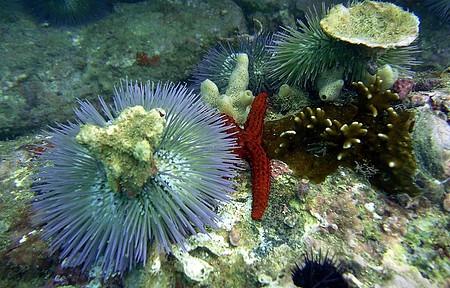 Riqueza e muitas cores no mar de João Fermandes