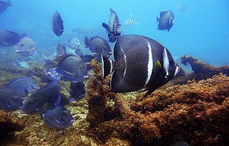 Cardumes de peixes coloridos sempre marcam presença!
