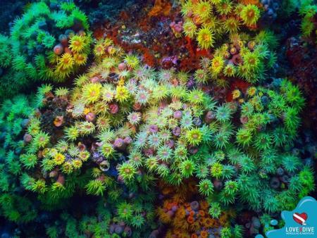 Corais encantadores enfeitam o fundo do mar