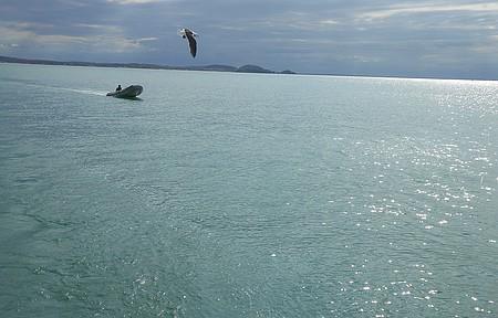 Barco, ave e sol brilhando no mar! Essa visão num passeio de escuna!!!