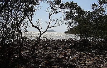 Caminhada ao Mangue de Pedras combina natureza, história e geologia